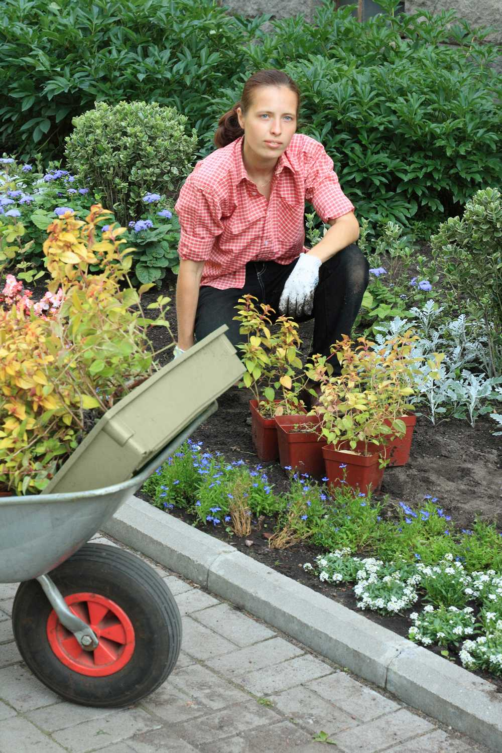Image Result For How To Start A Profitable Garden